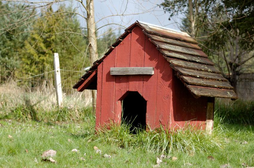 abri pour chiens rouge