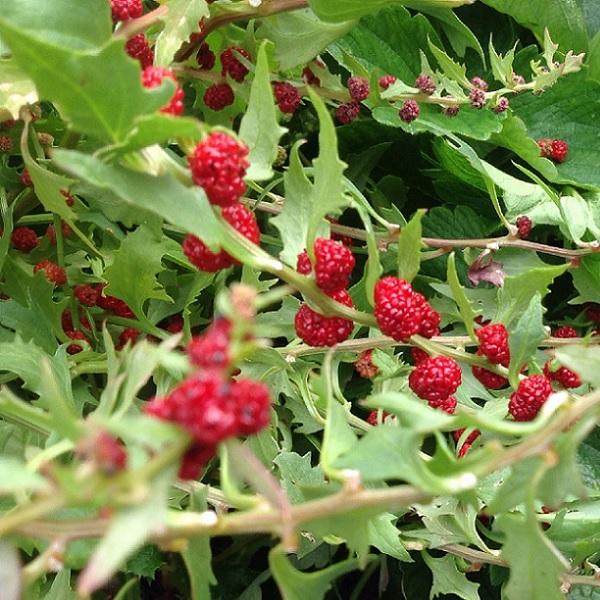 epinard fraise