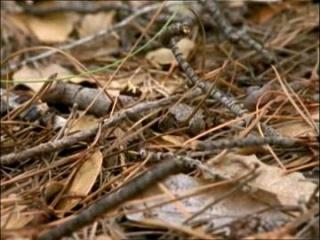 Feuilles et branches mortes au sol après l'hiver
