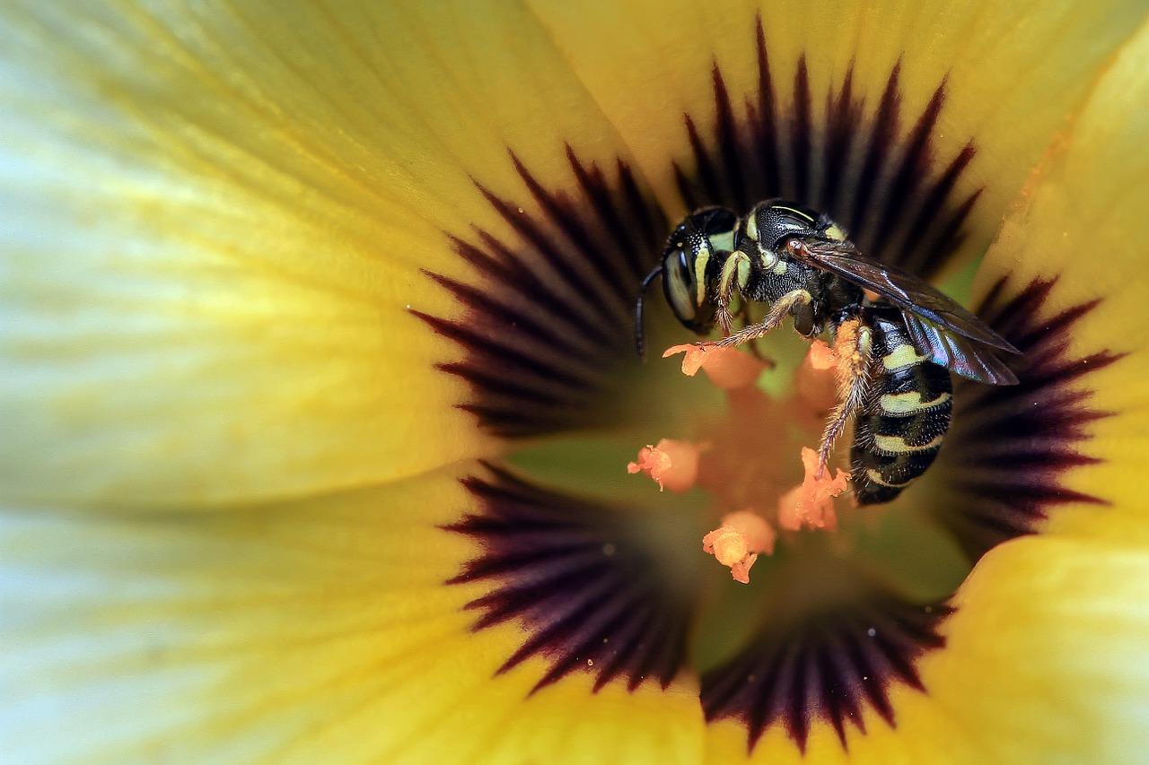 guepe fleur